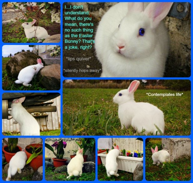 Click image for larger version.  Name:Alvin's Easter Collage 2.jpg Views:10 Size:97.5 KB ID:5435