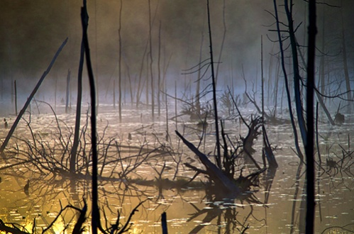 Click image for larger version.  Name:Dave-Enchanted Marsh.jpg Views:61 Size:80.8 KB ID:6293