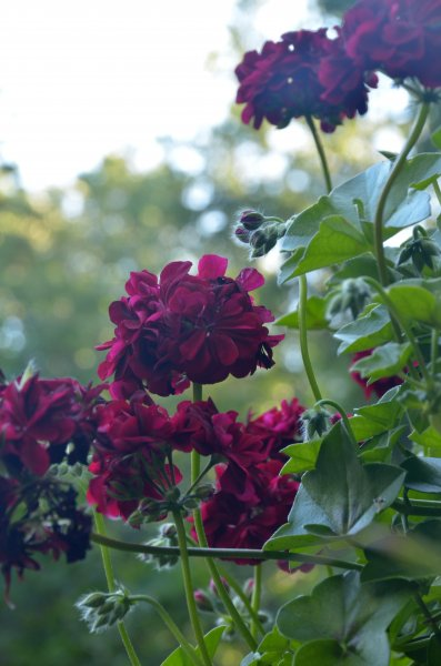 Click image for larger version.  Name:flowers 1.jpg Views:3 Size:45.0 KB ID:14402