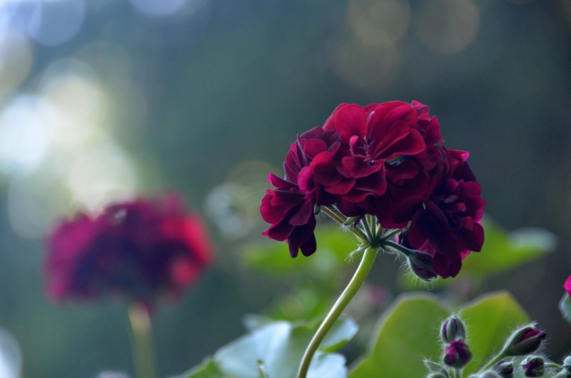 Click image for larger version.  Name:flowers 2.jpg Views:4 Size:41.5 KB ID:14403
