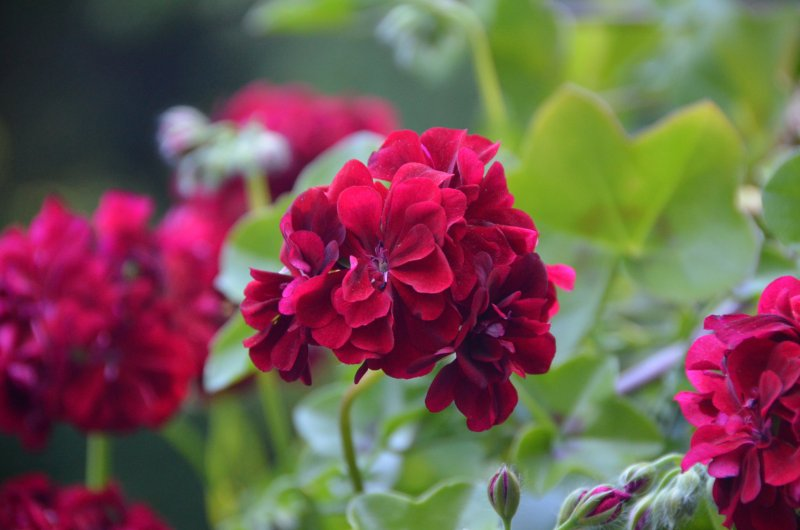 Click image for larger version.  Name:flowers 3.jpg Views:3 Size:56.4 KB ID:14404