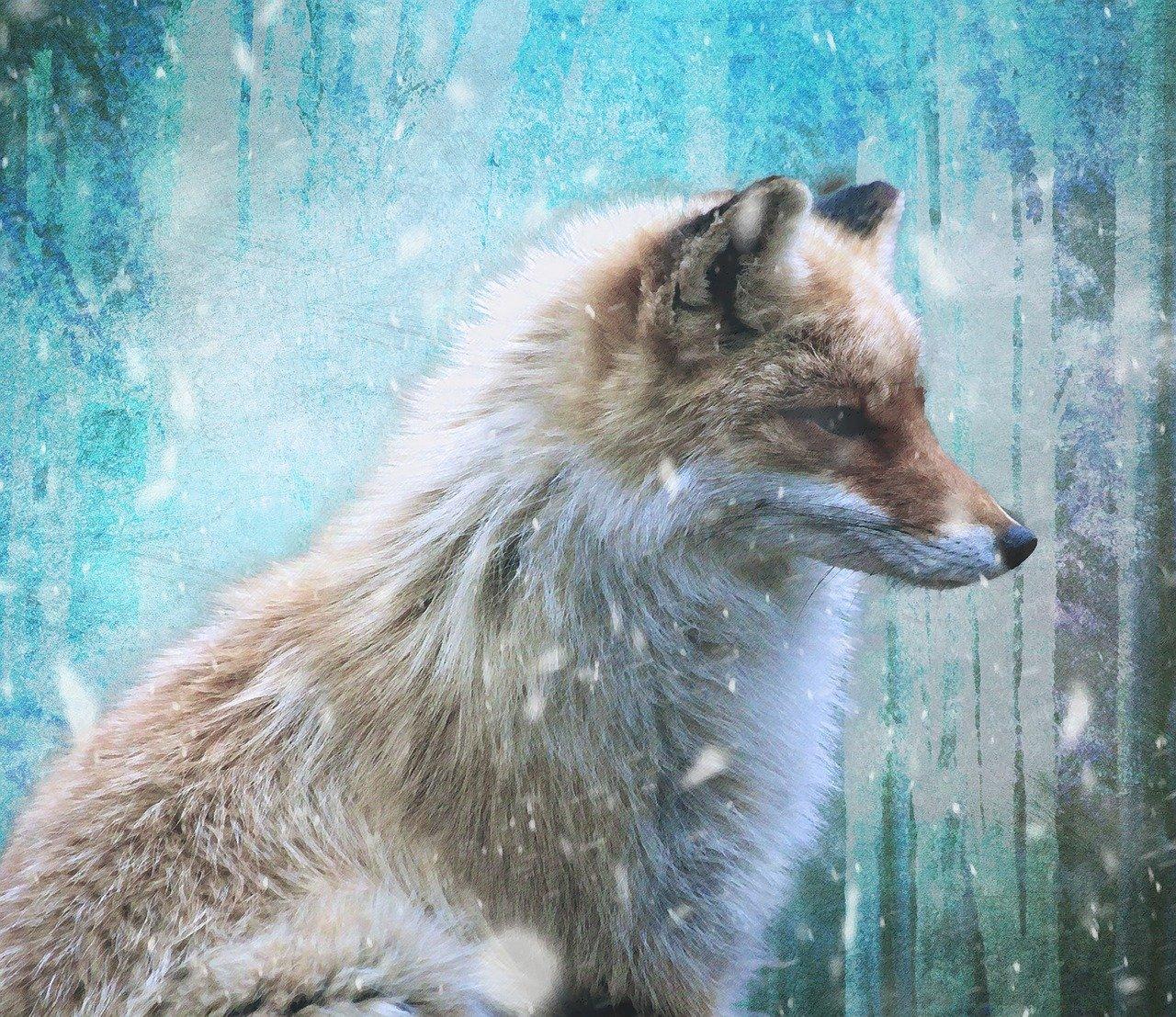 fox-3825376_1280.jpg