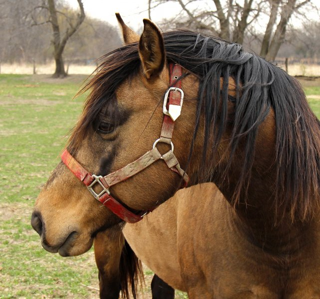 Click image for larger version.  Name:Horse.jpg Views:11 Size:95.6 KB ID:17415