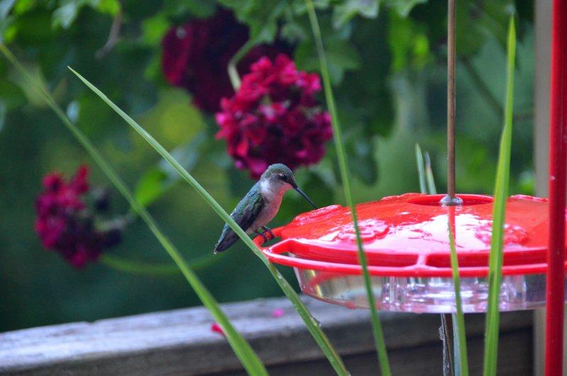 Click image for larger version.  Name:Hummingbird.jpg Views:5 Size:64.2 KB ID:14405