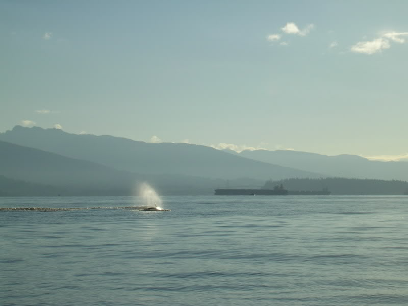 Click image for larger version.  Name:OrcasEnglishBay110808009.jpg Views:40 Size:33.6 KB ID:3140