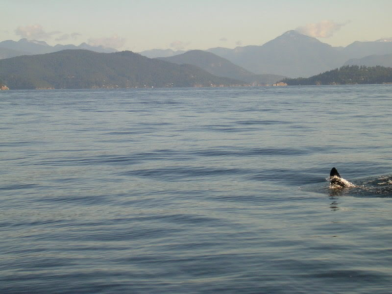Click image for larger version.  Name:OrcasEnglishBay110808019.jpg Views:41 Size:57.0 KB ID:3141