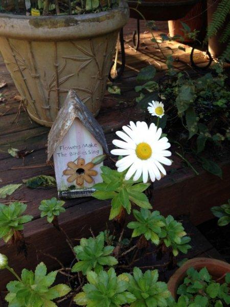 Click image for larger version.  Name:pandora's flower.jpg Views:5 Size:57.8 KB ID:10241
