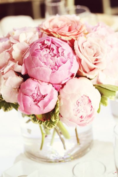 Click image for larger version.  Name:peonies.jpg Views:4 Size:40.5 KB ID:20198