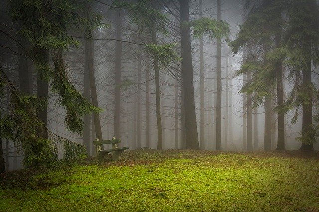 pine-273826_640.jpg