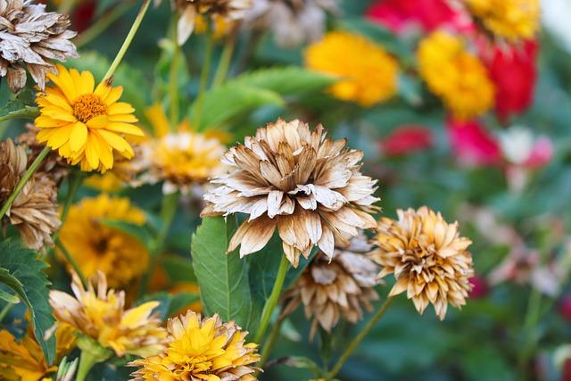 ranunkel-shrub-5542156_640.jpg