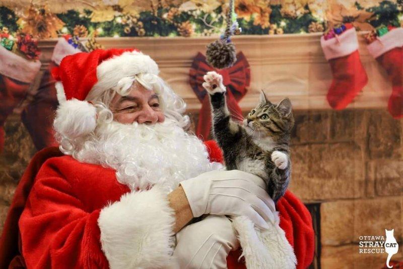 Click image for larger version.  Name:Santa Cat.jpg Views:4 Size:80.4 KB ID:25548