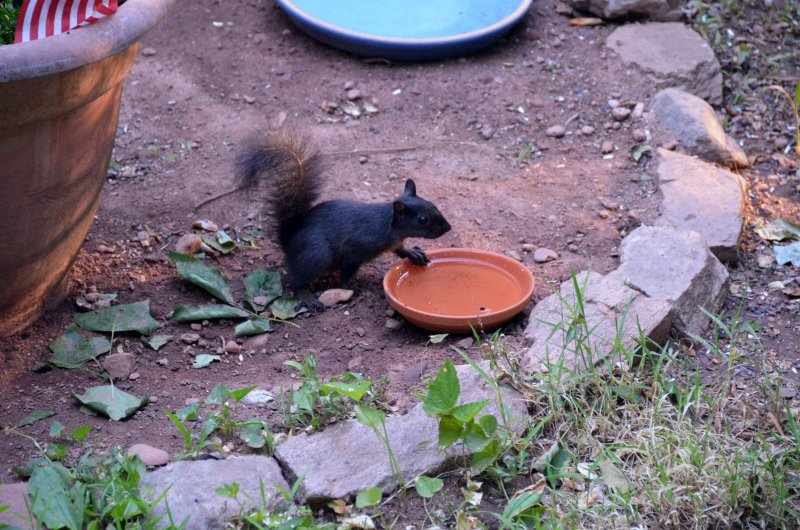 Click image for larger version.  Name:Squirrel.jpg Views:3 Size:128.8 KB ID:14412