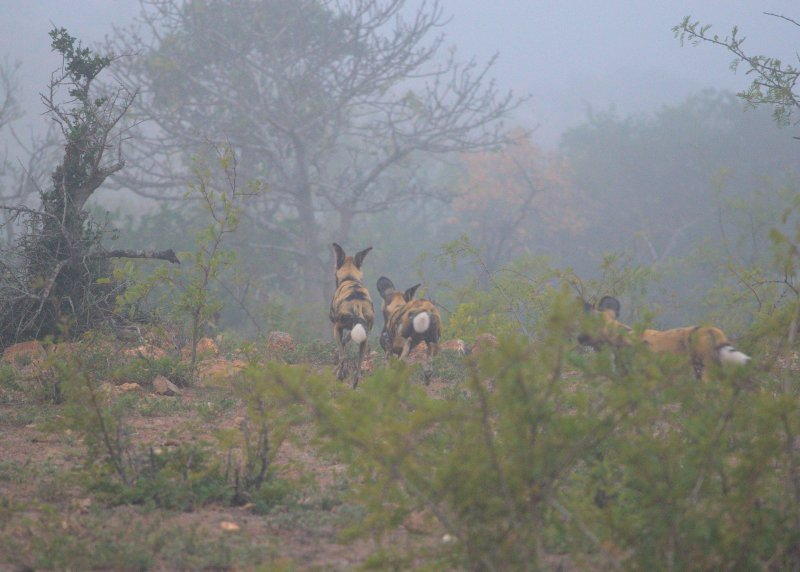 Click image for larger version.  Name:WD in the Mist.jpg Views:10 Size:71.9 KB ID:15507