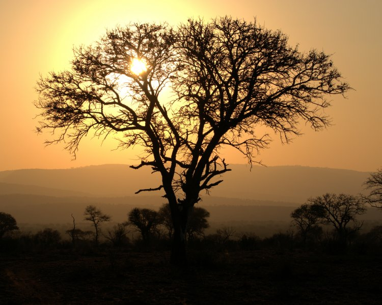 Click image for larger version.  Name:Yellow Tree Sunset.jpg Views:13 Size:102.5 KB ID:15506