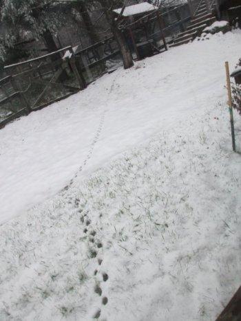 SnowTracks.jpg